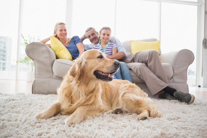 Keep your home comfortable with an air purifier